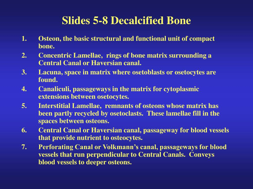 Slides 5-8 Decalcified Bone