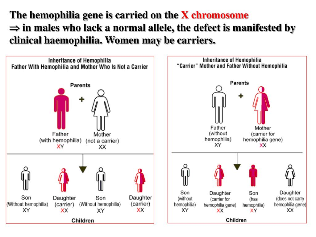 The hemophilia gene is carried on the