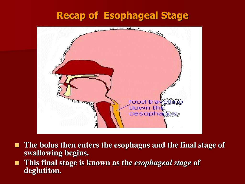 Recap of  Esophageal Stage