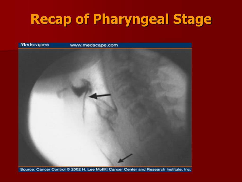 Recap of Pharyngeal Stage