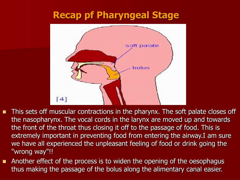 Recap pf Pharyngeal Stage