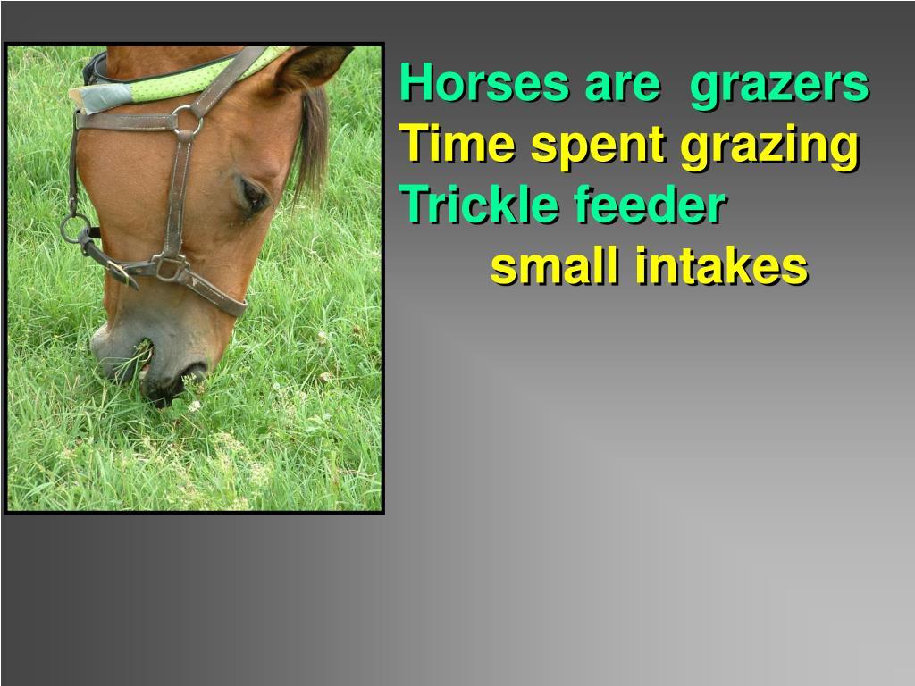 Horses are  grazers