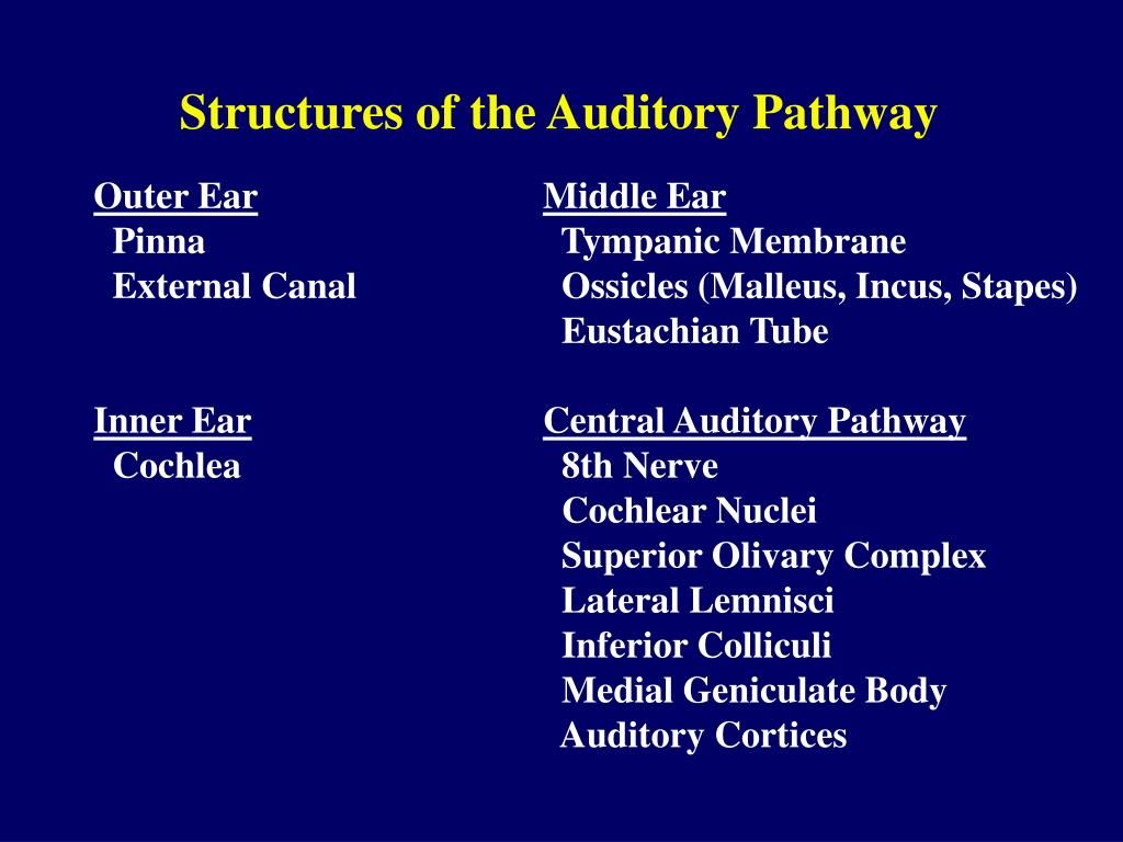 Structures of the Auditory Pathway