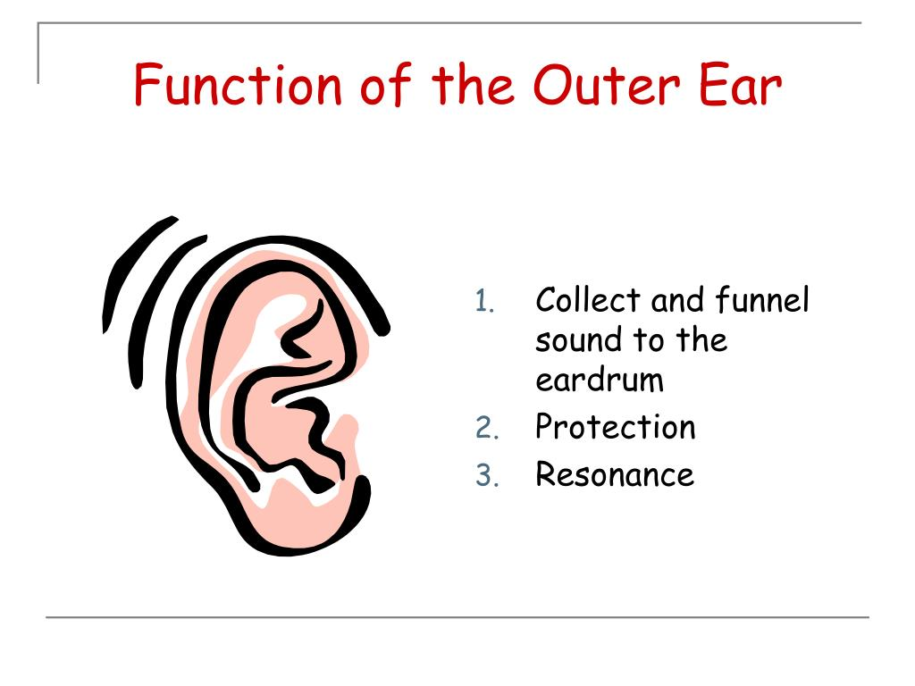Function of the Outer Ear
