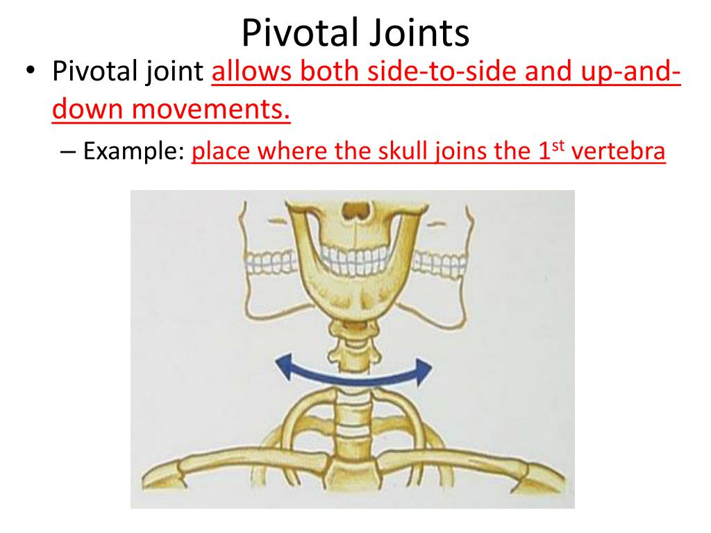 Pivotal Joints