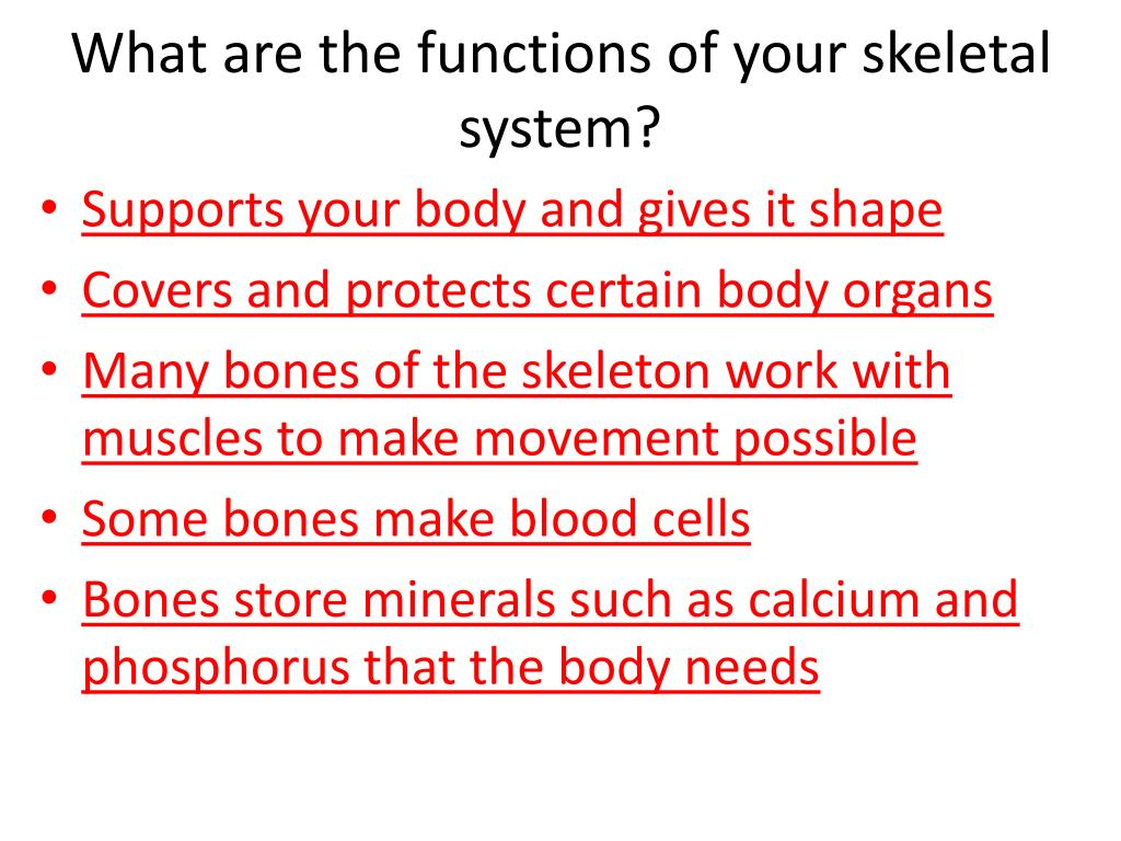 What are the functions of your skeletal system?