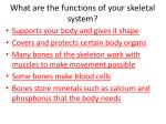 what are the functions of your skeletal system