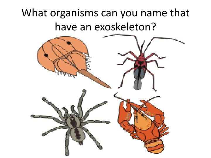 What organisms can you name that have an exoskeleton