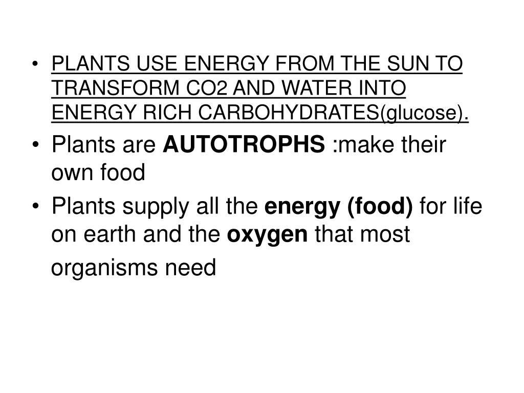 PLANTS USE ENERGY FROM THE SUN TO TRANSFORM CO2 AND WATER INTO ENERGY RICH CARBOHYDRATES(glucose).