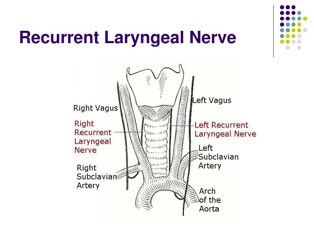 Recurrent Laryngeal Nerve