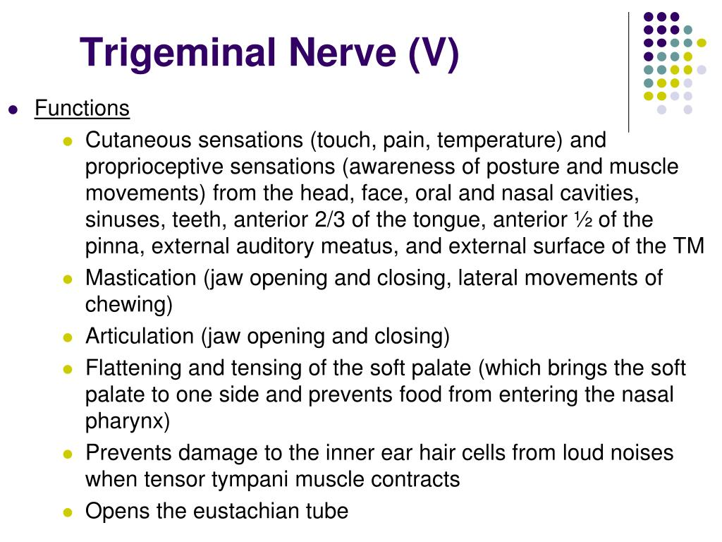 Trigeminal Nerve (V)