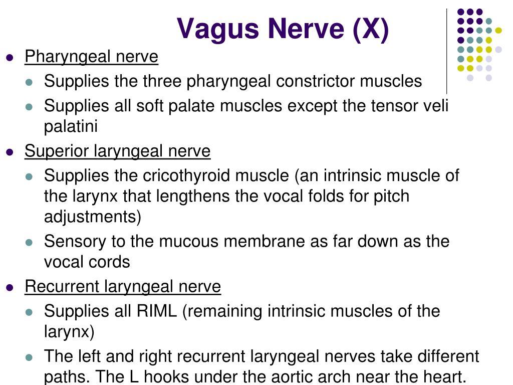 Vagus Nerve (X)