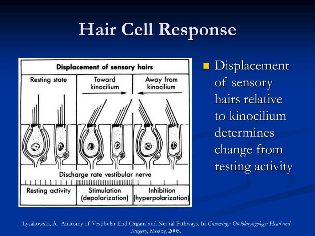 Hair Cell Response