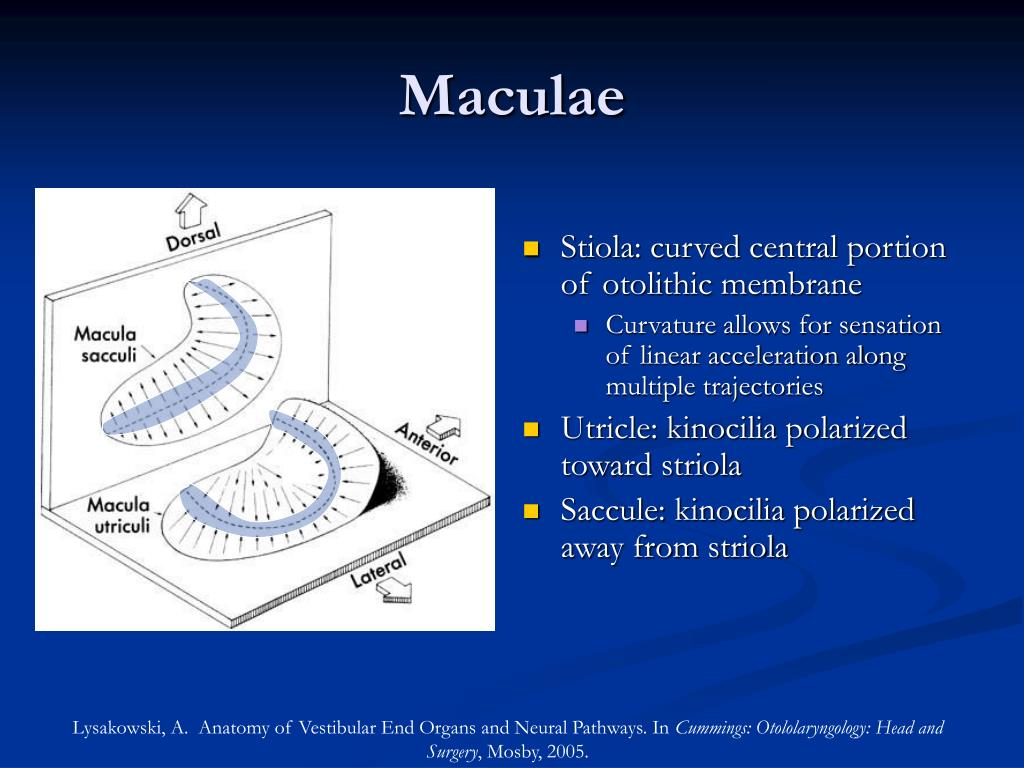 Maculae