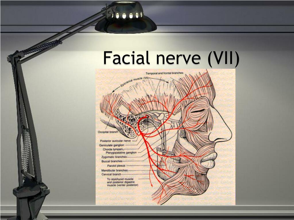 Facial nerve (VII)