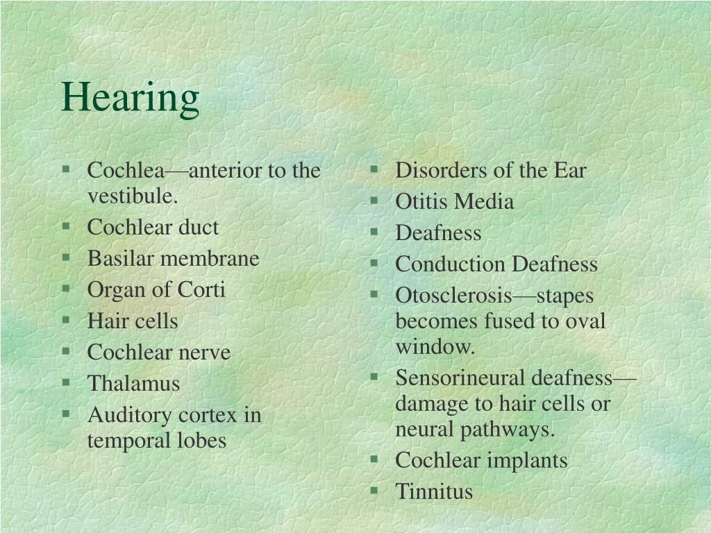 Cochlea—anterior to the vestibule.