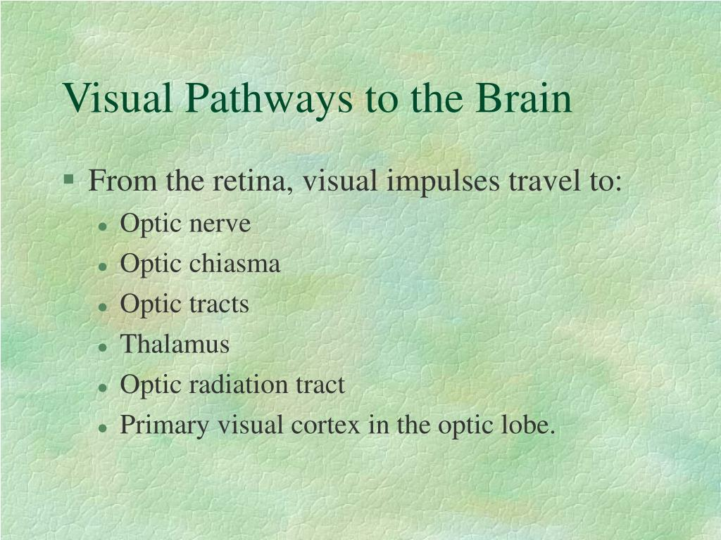 Visual Pathways to the Brain