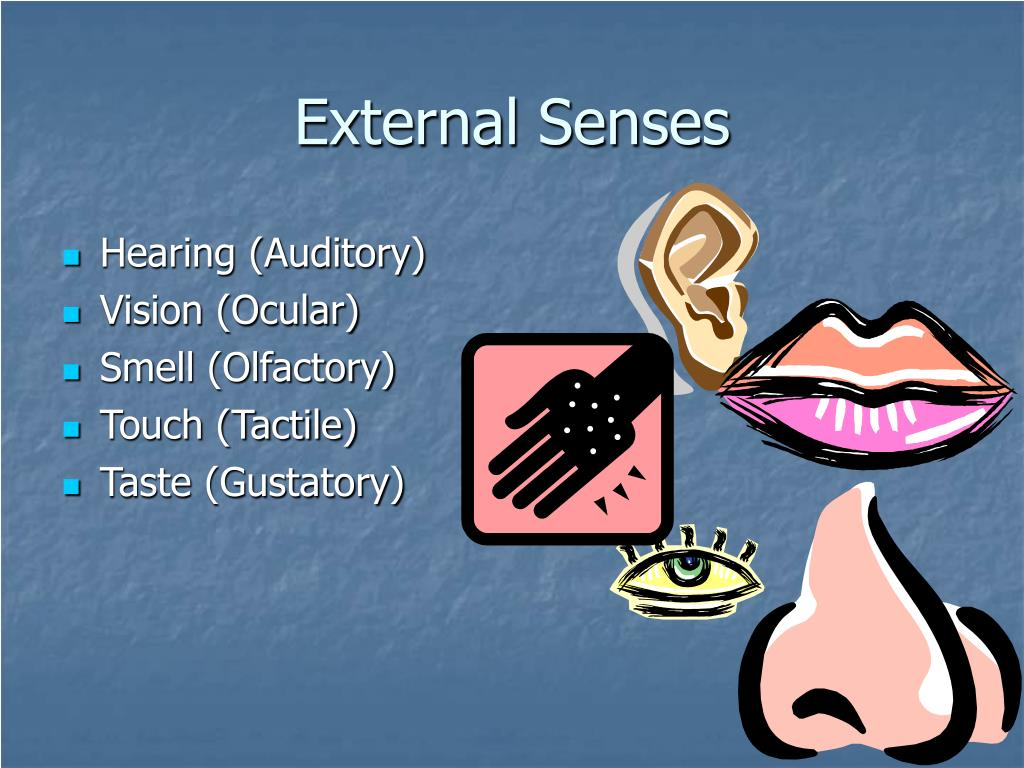 External Senses