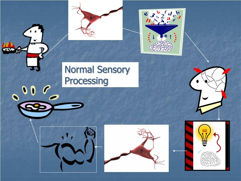 Normal Sensory Processing