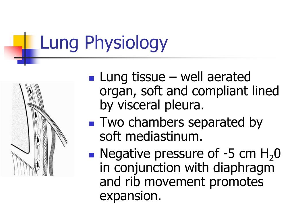 Lung Physiology