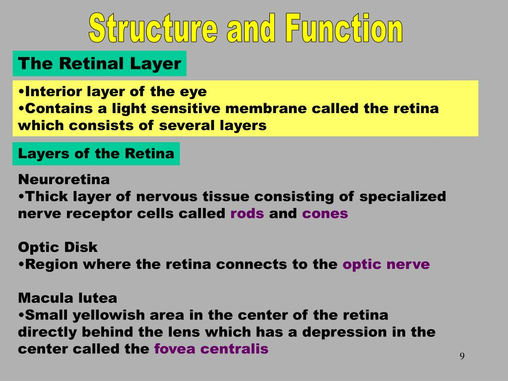 The Retinal Layer