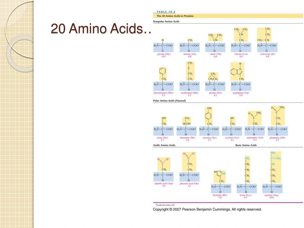 20 Amino Acids