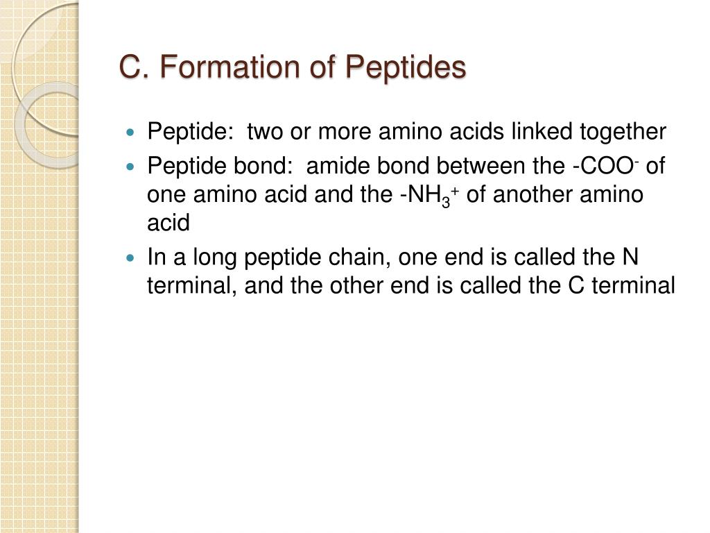 C. Formation of Peptides