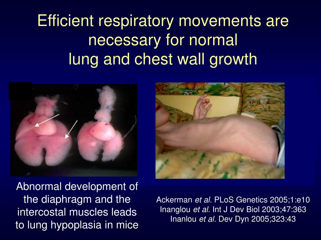 Efficient respiratory movements are necessary for normal