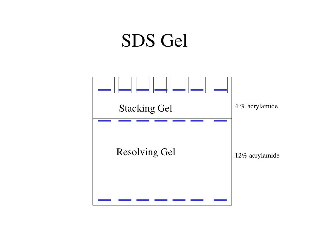 SDS Gel