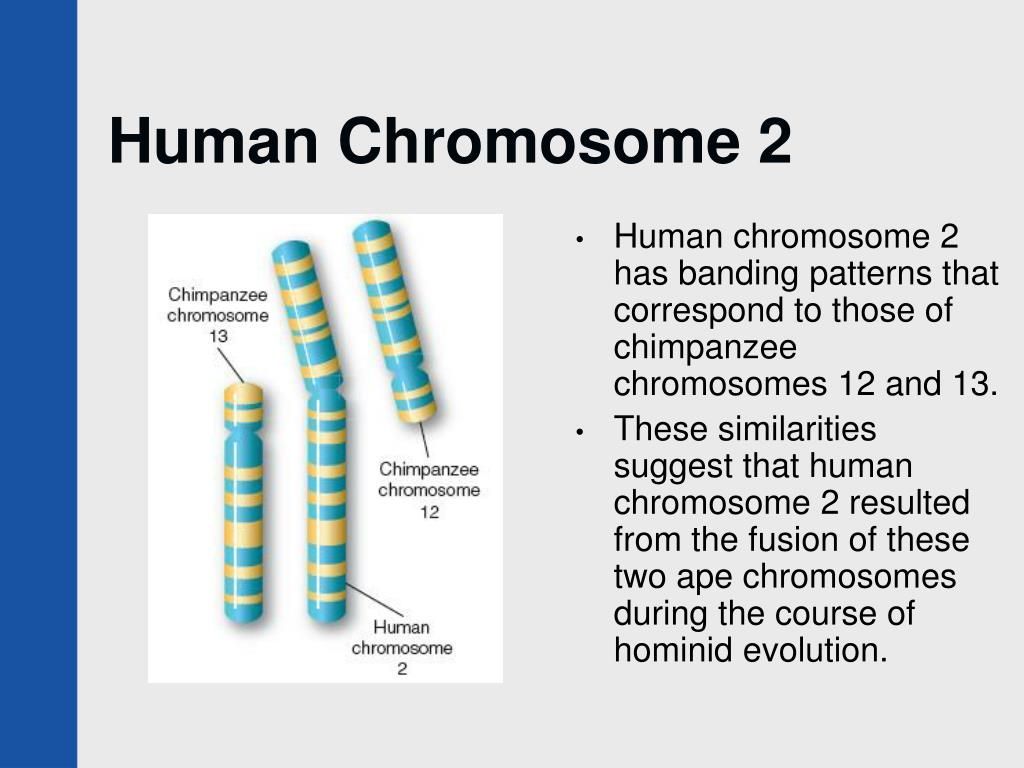 chromosome 6 Click on the gene name for detailed information type in the search box eg 'germline' or 'breast cancer' to search within chromosome 6 or sort by clicking on a column heading eg 'gene'.