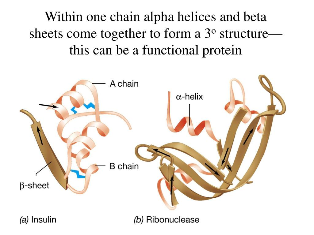 Within one chain alpha helices and beta sheets come together to form a 3