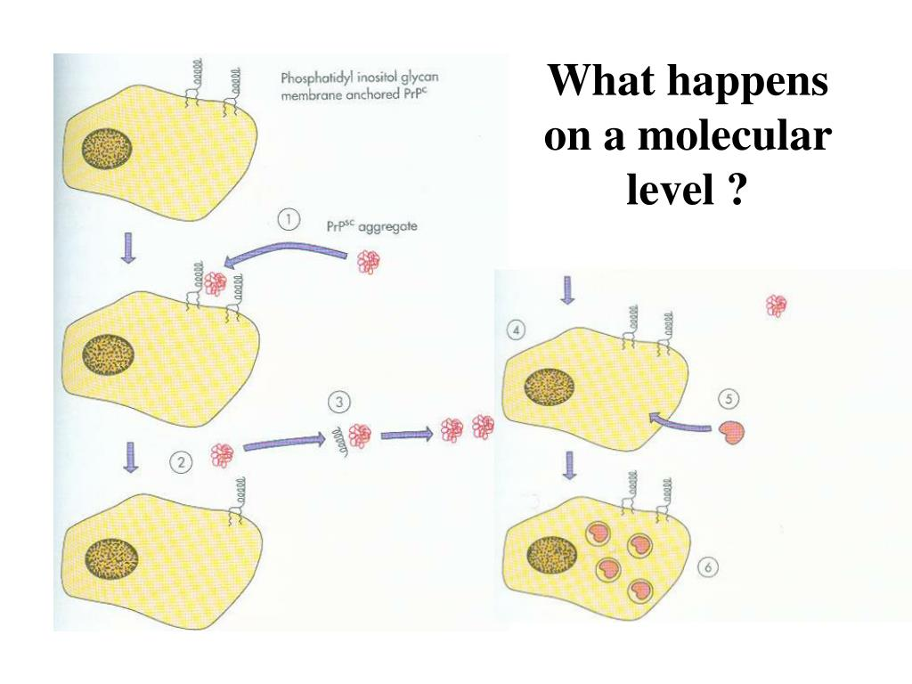 What happens on a molecular level ?