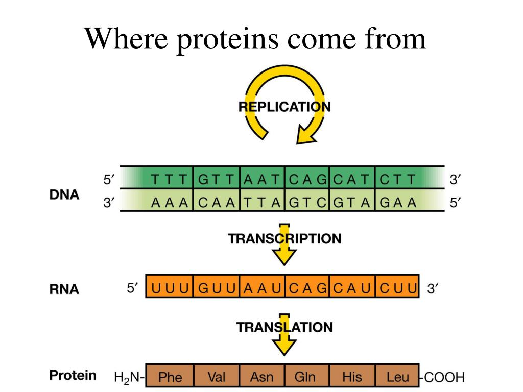 Where proteins come from