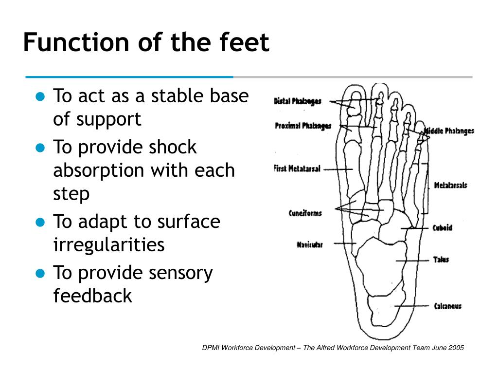 Function of the feet