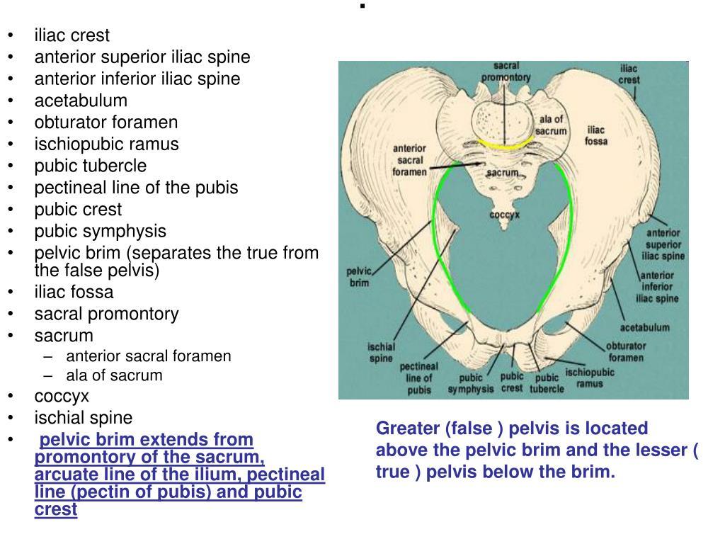 Ppt - Pelvis Fracture Powerpoint Presentation