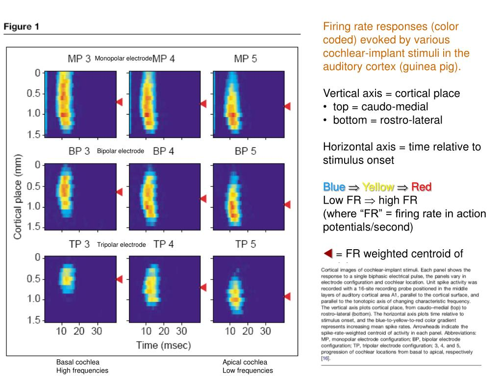 Firing rate responses (color coded) evoked by various cochlear-implant stimuli in the auditory cortex (guinea pig).