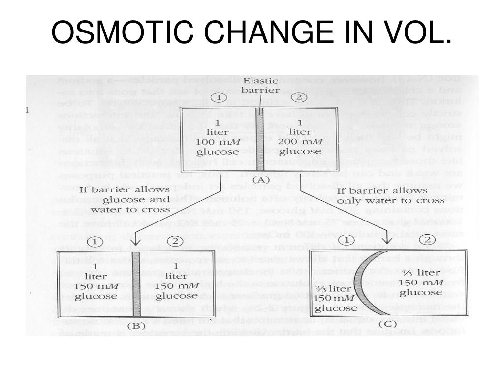 OSMOTIC CHANGE IN VOL.