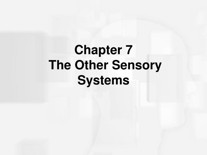 Chapter 7 the other sensory systems