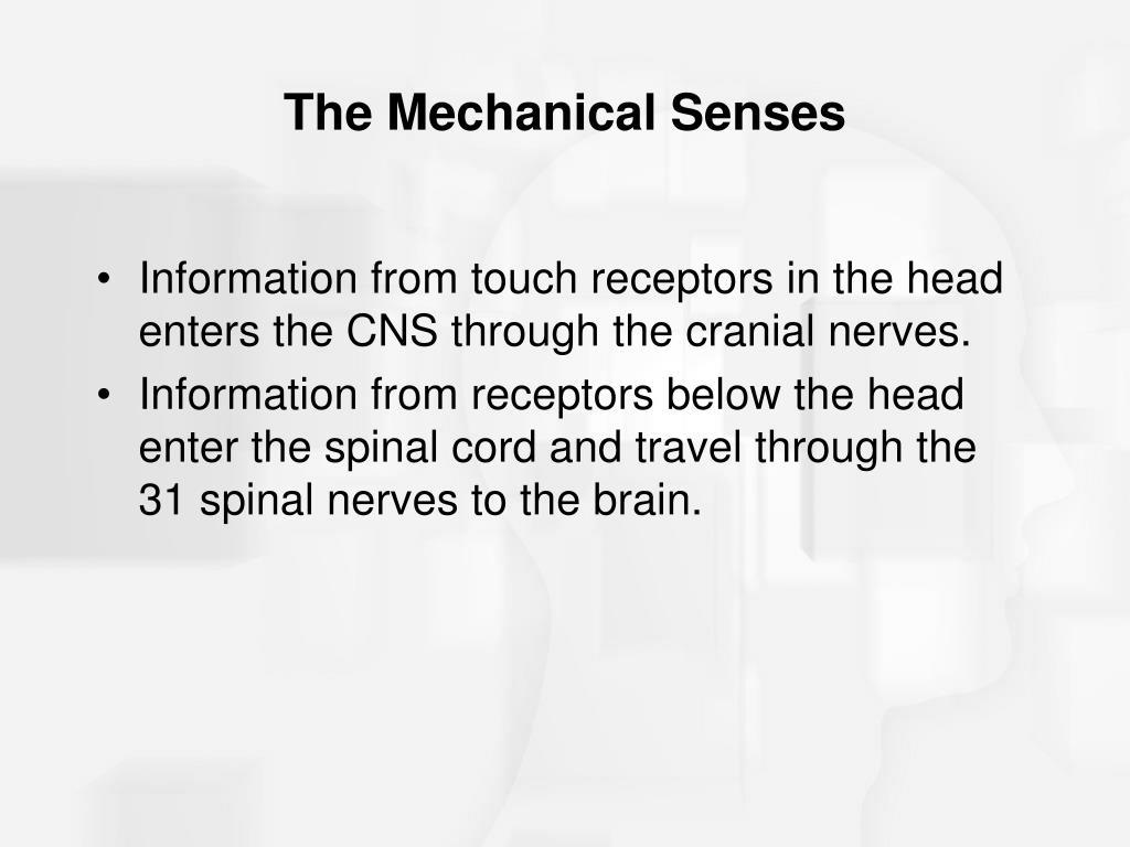 The Mechanical Senses