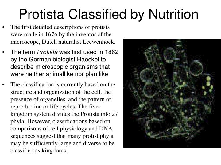 Protista classified by nutrition