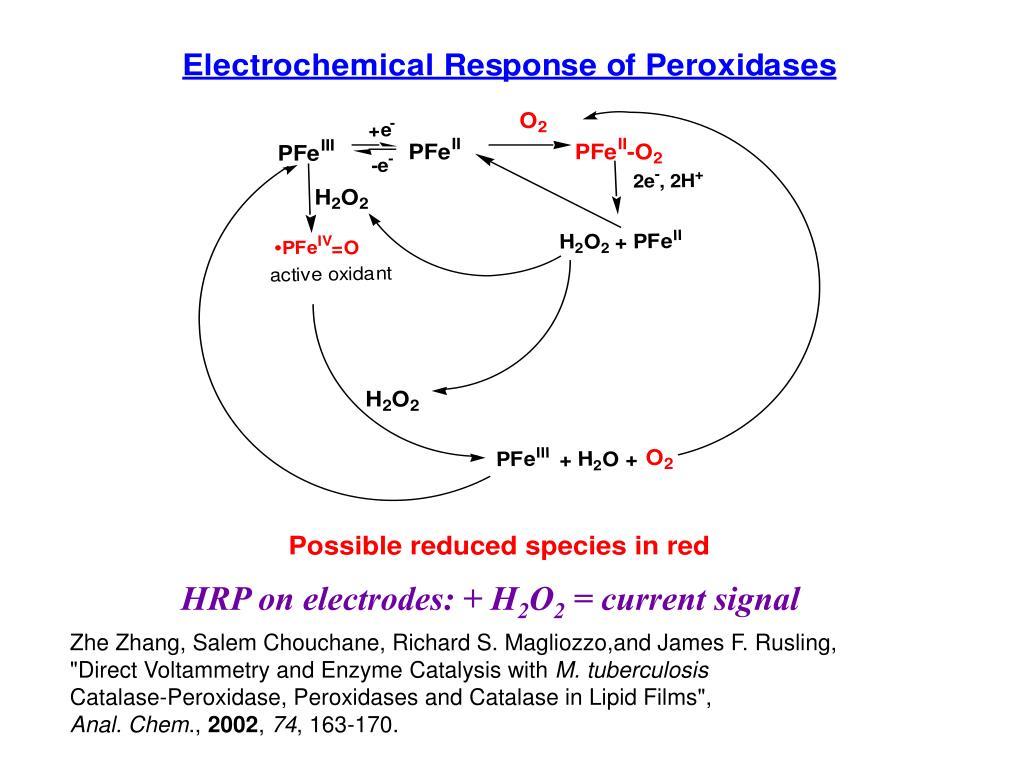 HRP on electrodes: + H