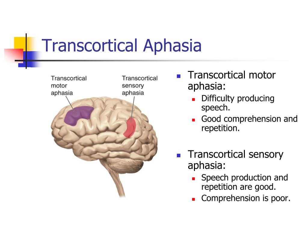 Transcortical Aphasia