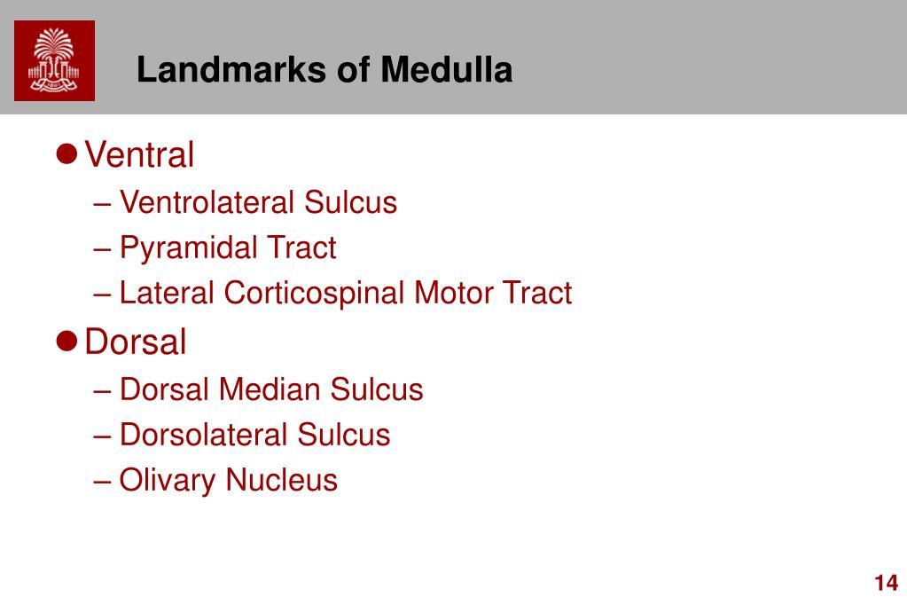 Landmarks of Medulla