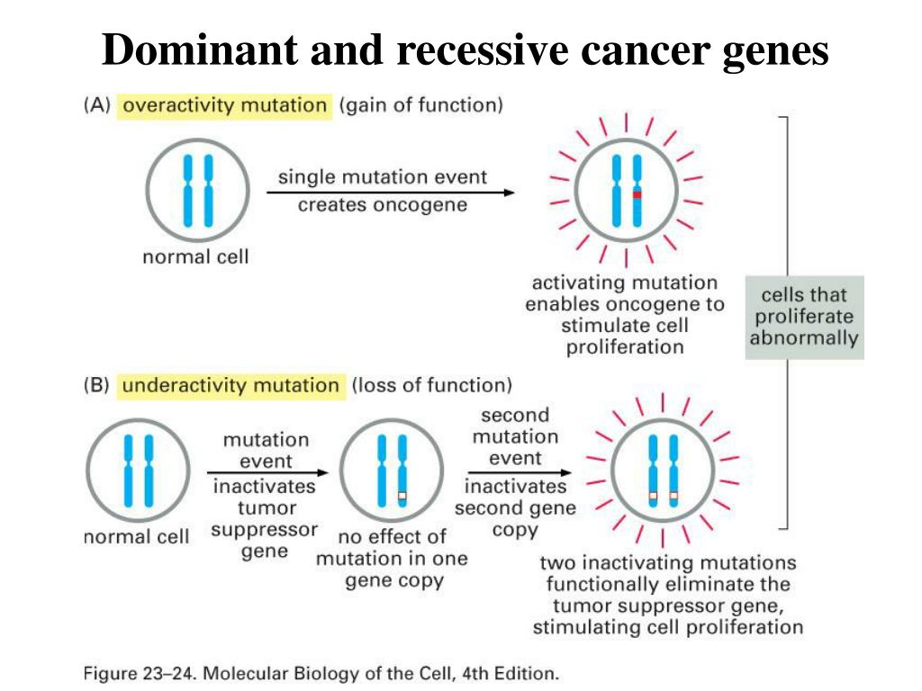 Dominant and recessive cancer genes