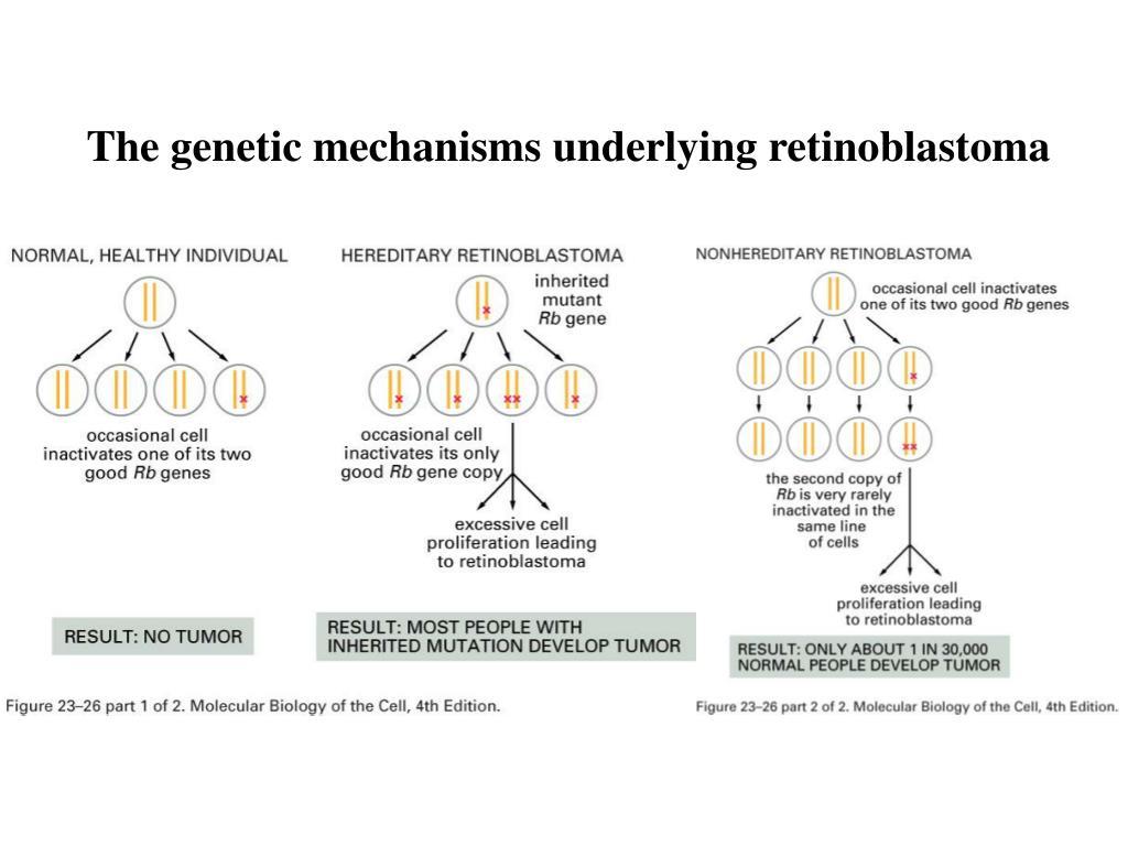 The genetic mechanisms underlying retinoblastoma