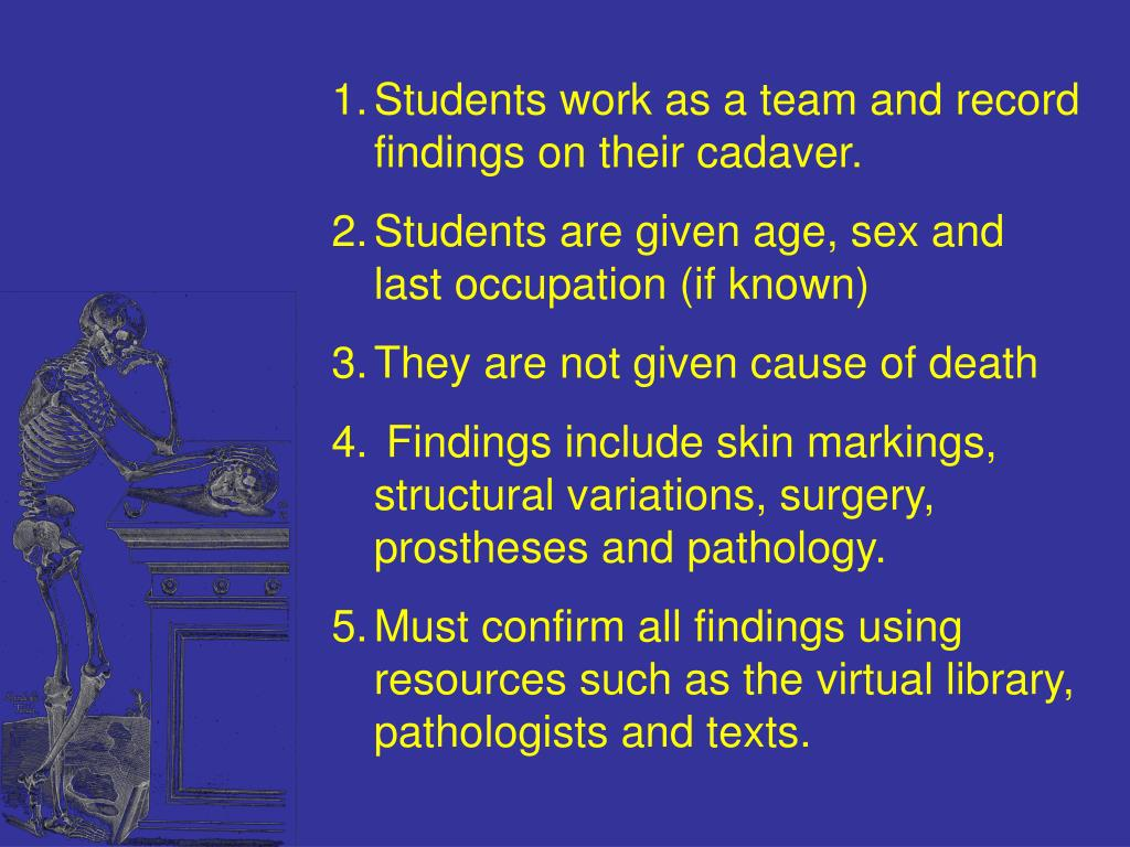 Students work as a team and record findings on their cadaver.