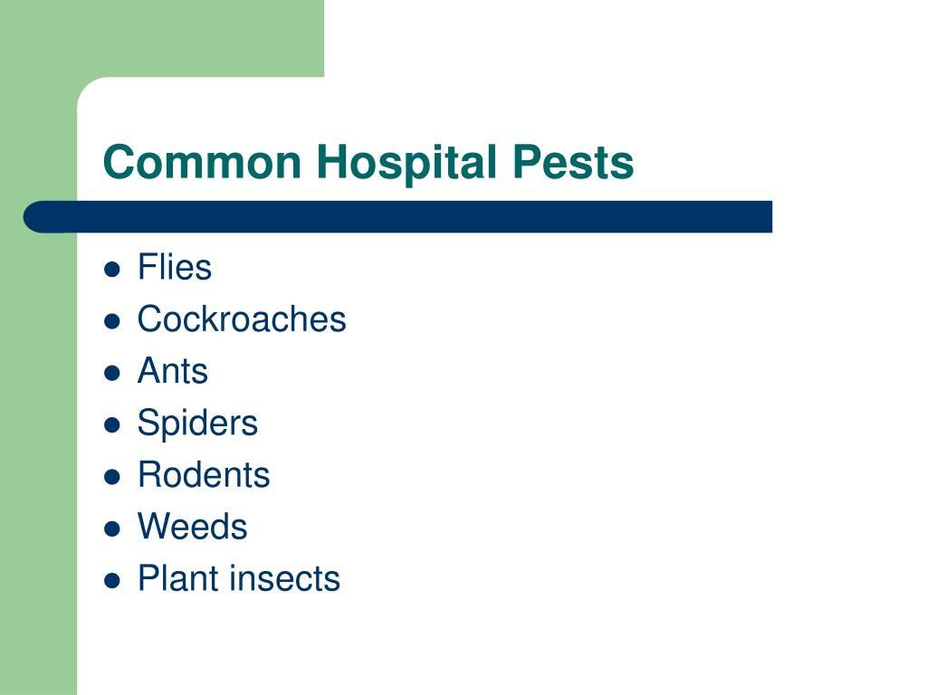 Common Hospital Pests