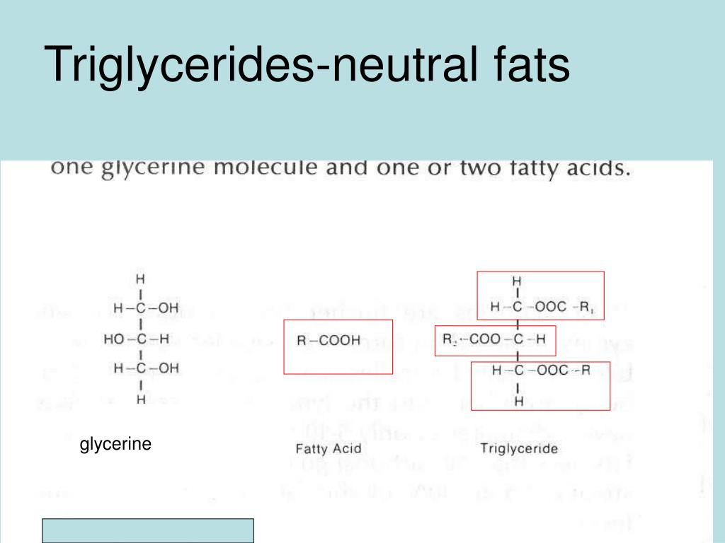 Triglycerides-neutral fats