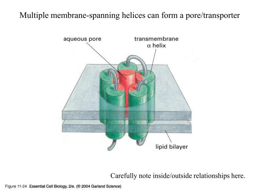 Multiple membrane-spanning helices can form a pore/transporter