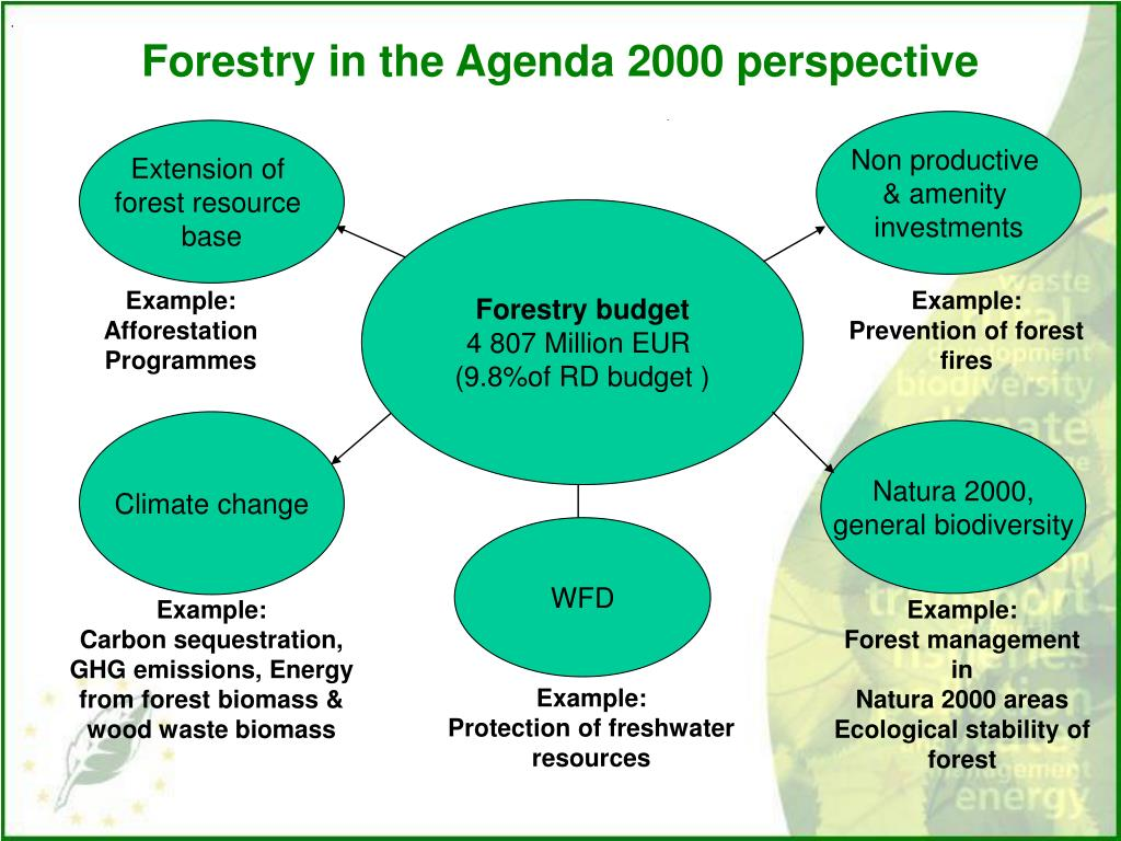 Forestry in the Agenda 2000 perspective